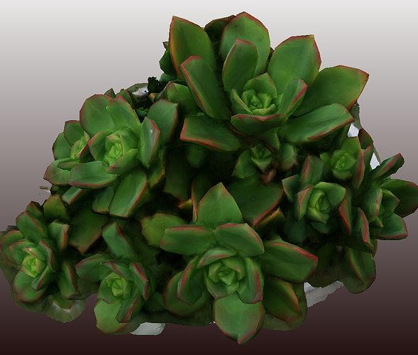 kleinia plant 3d scan - low polygon  3d model low-poly obj 1