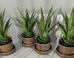 Indoor plant 3 3D Model