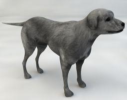 Dog Half-breed 3D model