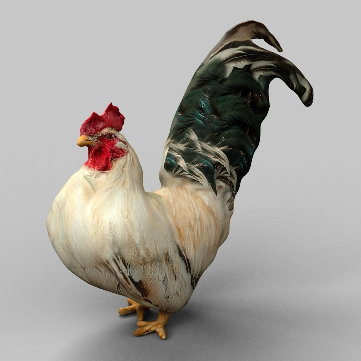 cock rooster 3d asset | cgtrader