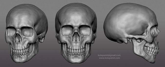 skull ztl 3d model obj mtl ztl 1