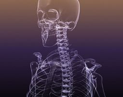 3d model skeleton of a human x-ray scan renderready