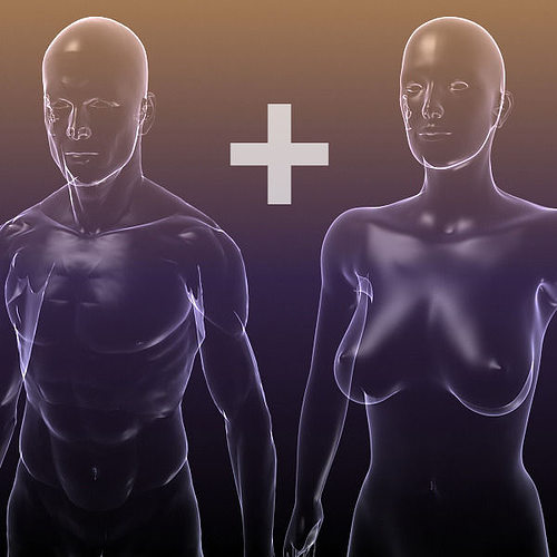 male and female anatomy transparent bodies 3d model max obj mtl 3ds fbx c4d lwo lw lws 1