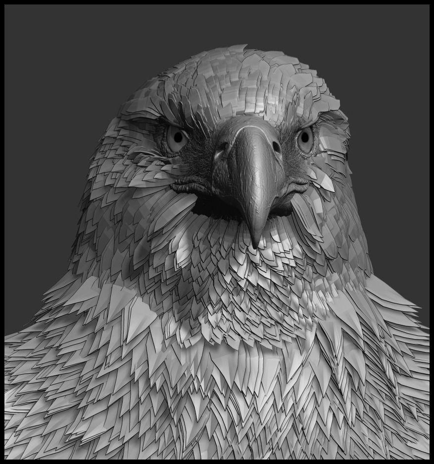 Bald Eagle Anatomy - Best Eagle 2018