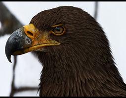 Eagle 3D Model  3D Model