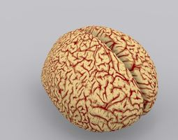 Human Brain 2 3D Model