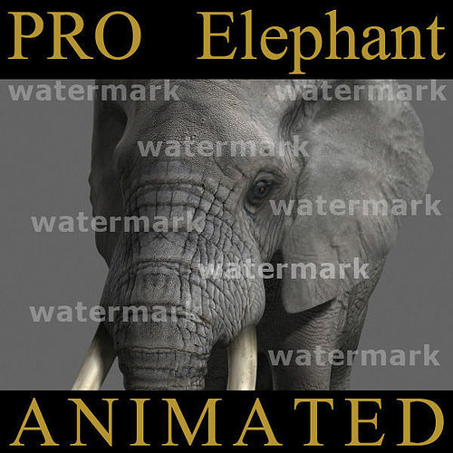 pro elephant animated - 3d model 3d model rigged animated max obj fbx mtl 1