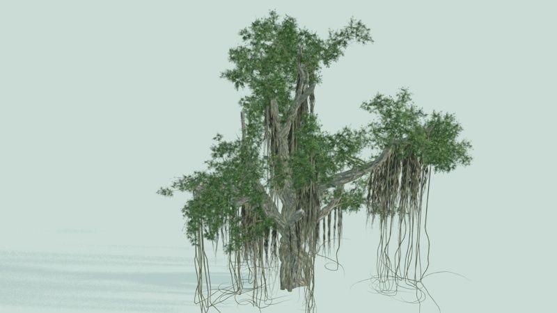 Chinese Banyan | 3D model