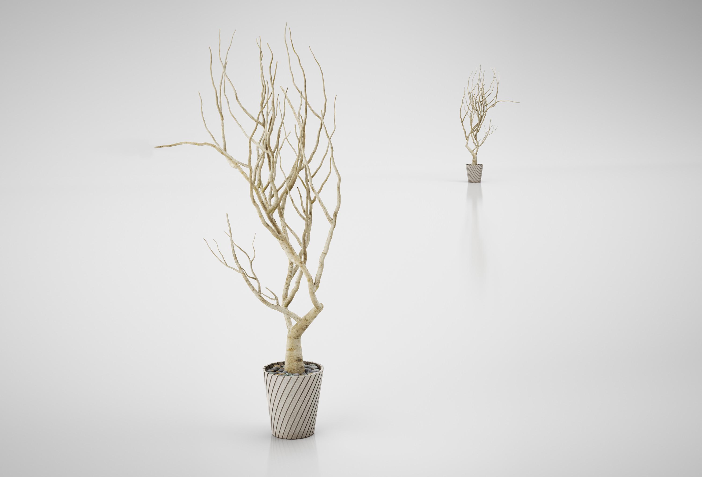 tree decor cedar apply decorative does not lg spiral outdoor indoor vase itm artificial topiary w