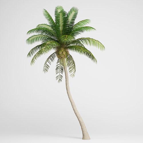 cgaxis coconut palm 04 3d model max obj fbx c4d 1