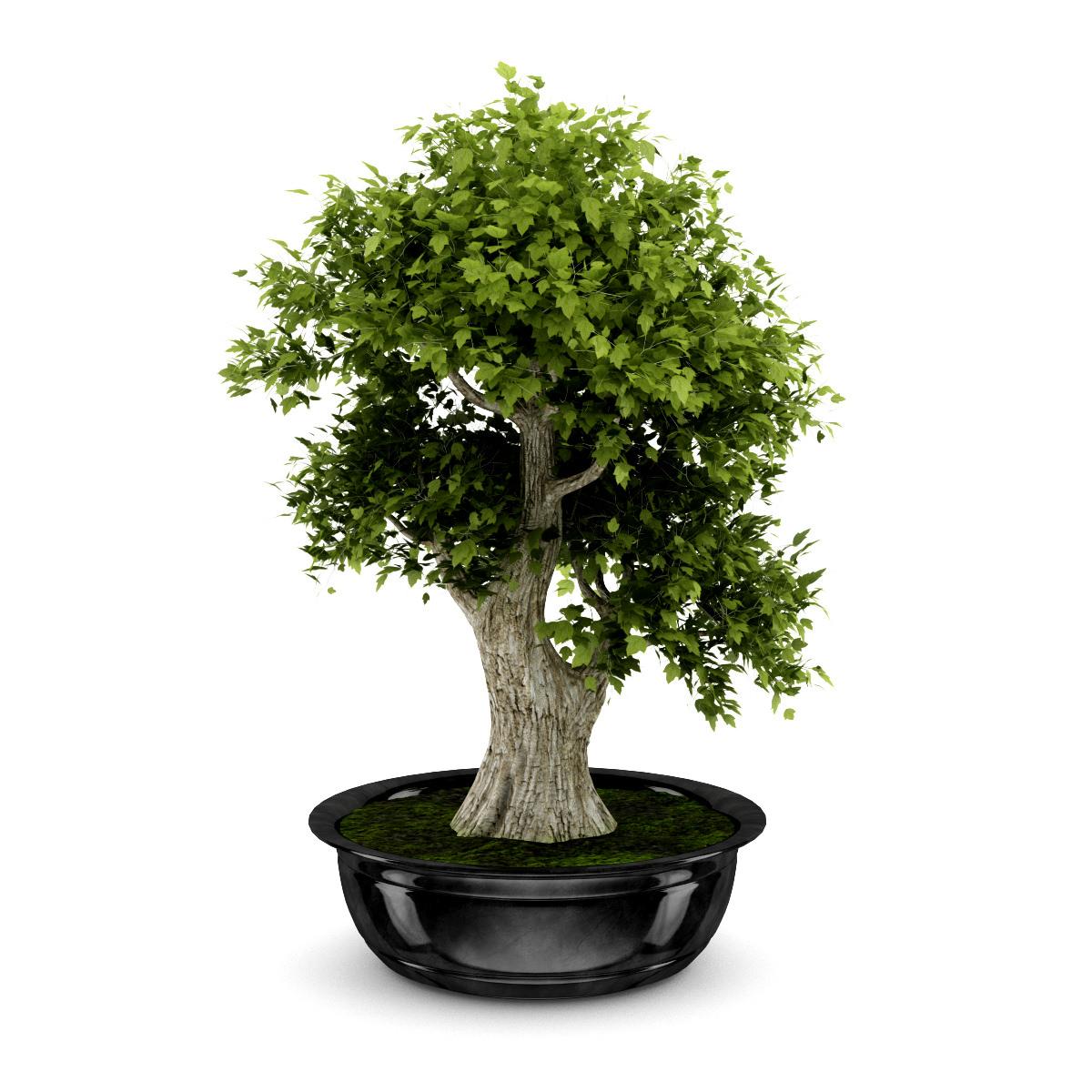 Best Buy Military Discount >> 3D model Bonsai Tree | CGTrader