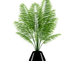 potted palm 3d model
