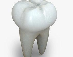 Realistic Human Teeth 3D