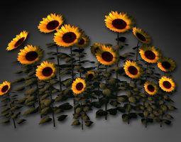 Sunflower Cluster 3D model
