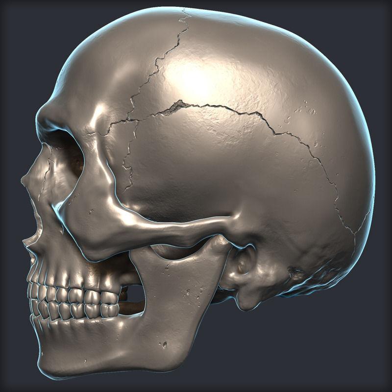 Skull 3D Model scary | CGTrader