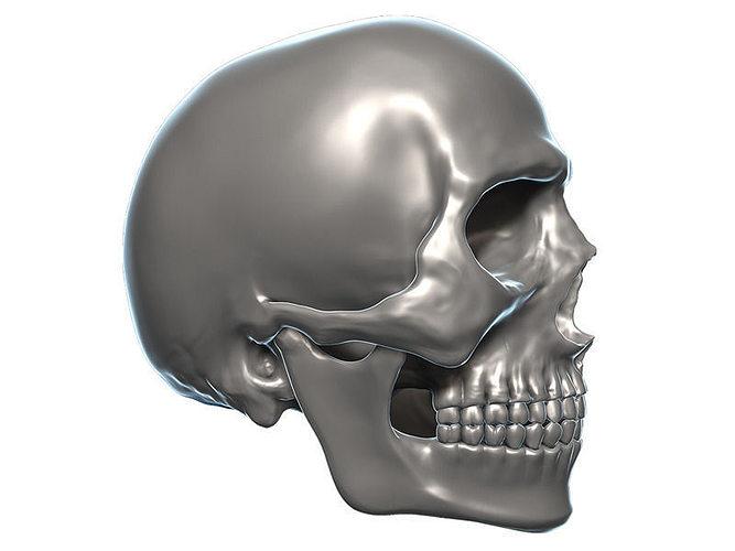 skull 3d model zbrush obj 3d model max obj ztl mtl 1