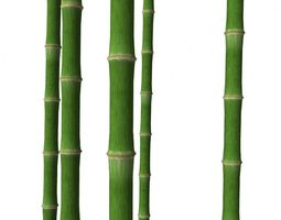 3d model bamboo trunk game-ready
