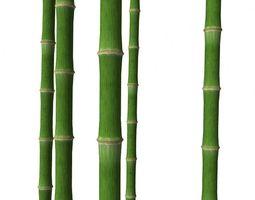 bamboo trunk game-ready 3d asset