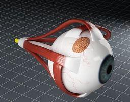 Anatomy eye 3D Model