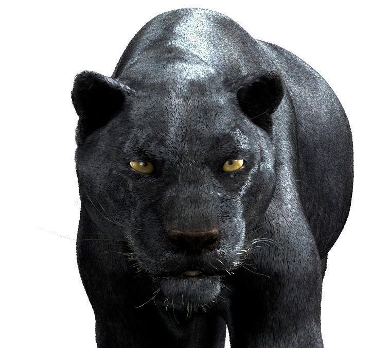 Panther-maya