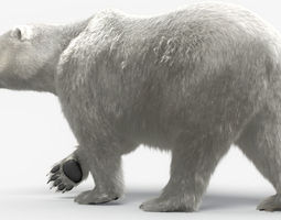 bear-polar-maya 3d model rigged ma mb