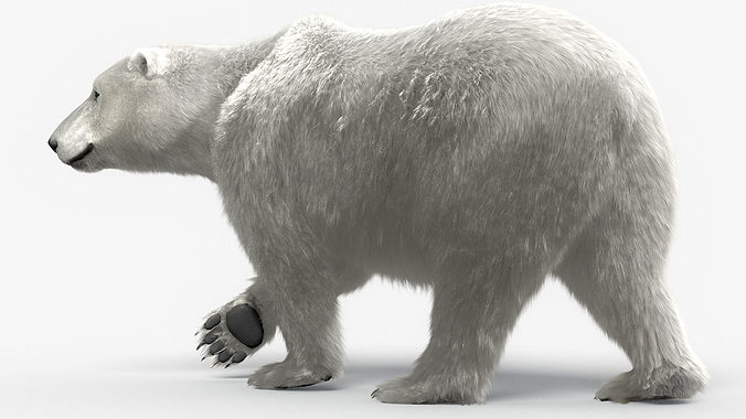 bear-polar-maya 3d model rigged ma mb rib slc sl slo 1