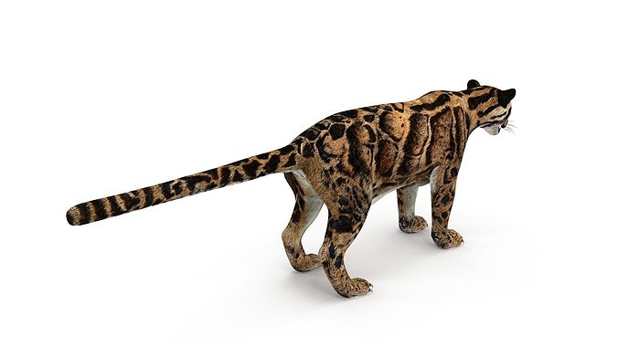 leopard     3d model low-poly max obj mtl fbx dae 1