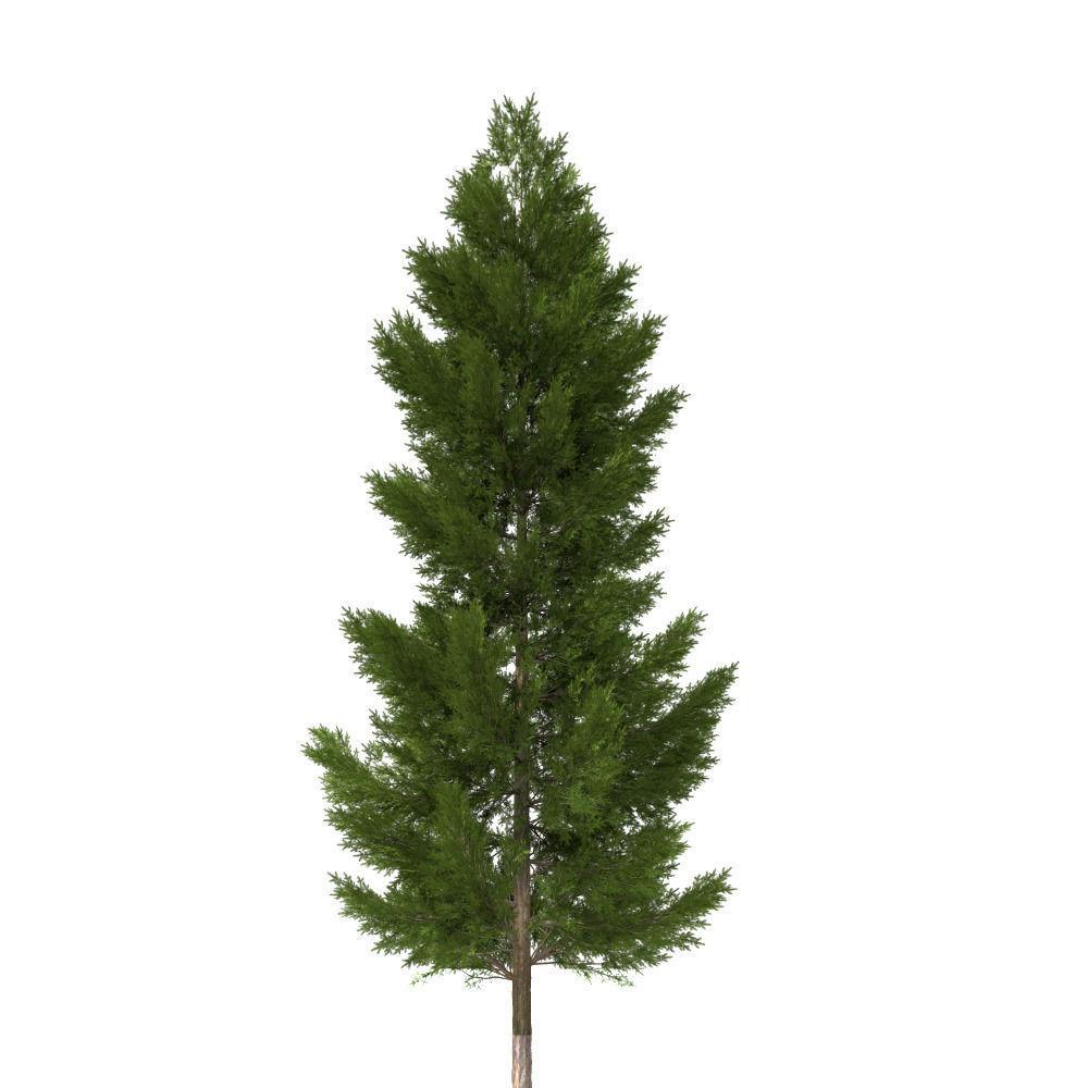 3d pine tree 20m cgtrader