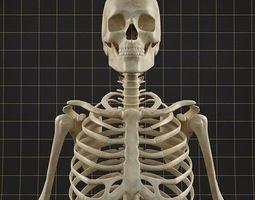 3d anatomy skeleton 01