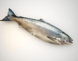 fresh raw salmon 3d