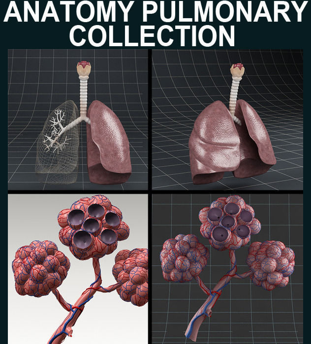 Anatomy collection 02