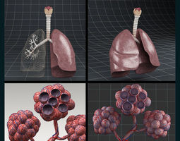 anatomy collection 02 3d
