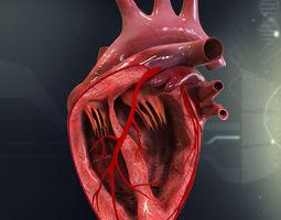 Human Heart Cutaway Anatomy 3D Model