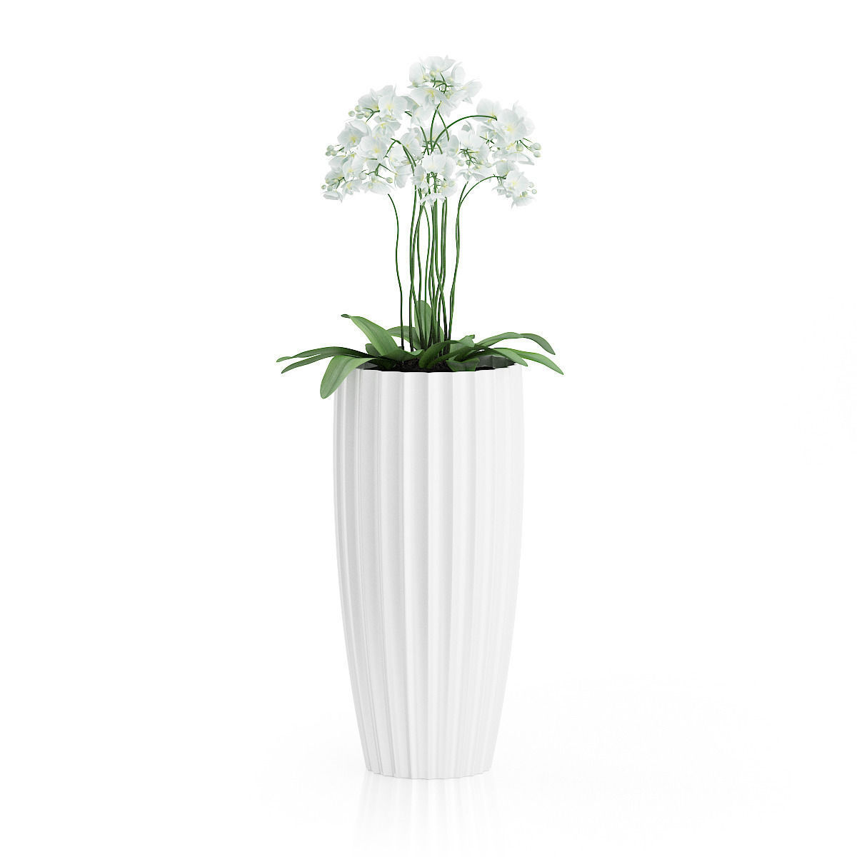 3d Orchid Flowers In Tall Pot Cgtrader