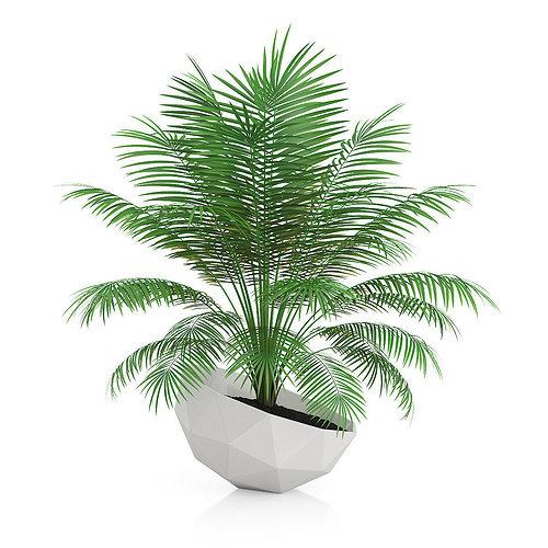 palm tree in modern pot 3d model max obj mtl fbx c4d 1