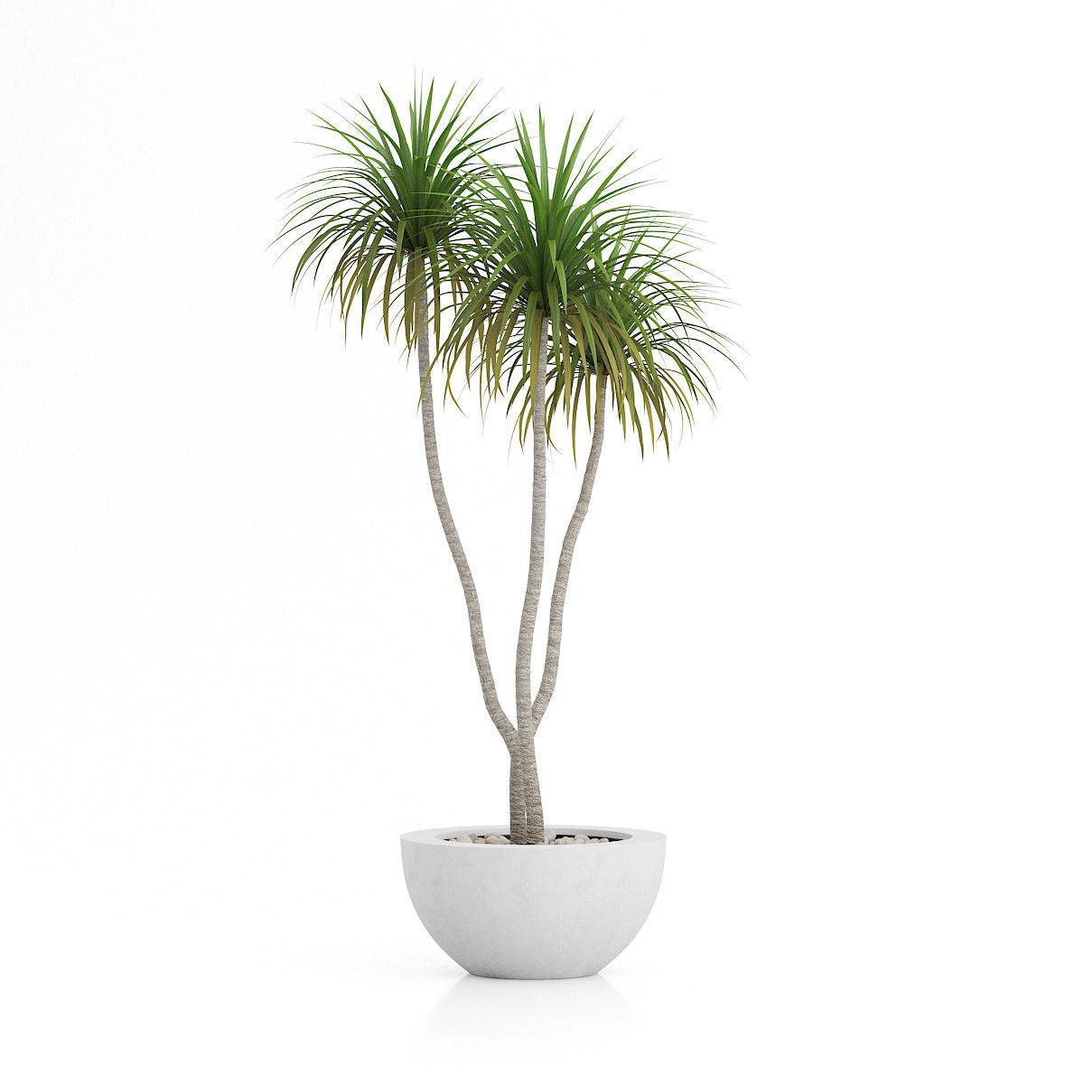 3d Plants Iv Cgaxis Models Volume 60 Vray 3d Model Max