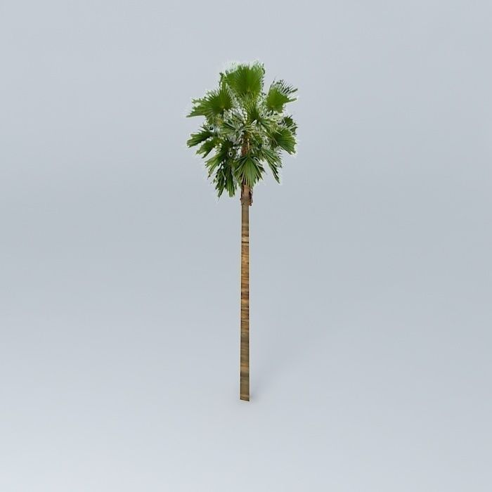 3D model Californian Palm Tree | CGTrader