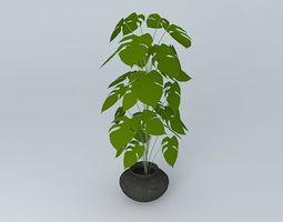 Indoor Plant 3D