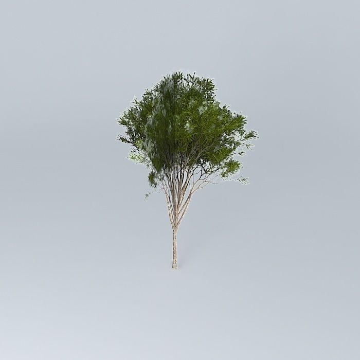 Australian Tea Tree Melaleuca Alternifolia 1 Free 3d Model
