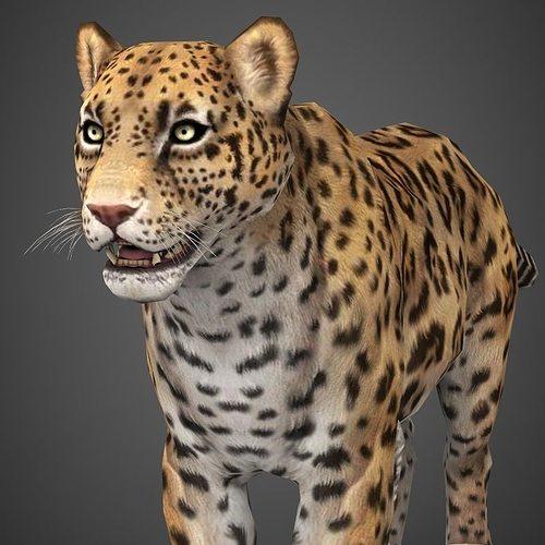 low poly cheetah 3d model low-poly max obj mtl 3ds fbx c4d lwo lw lws 1