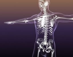 Human Skeleton in Body 3D