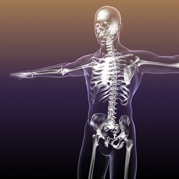 human skeleton in body 3d model max obj 3ds fbx c4d stl, Skeleton