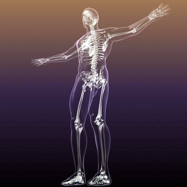 Human Skeleton In Body 3d Cgtrader