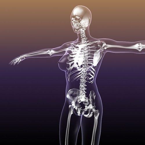 Female Skeleton in Woman Body Anatomy 3D model | CGTrader