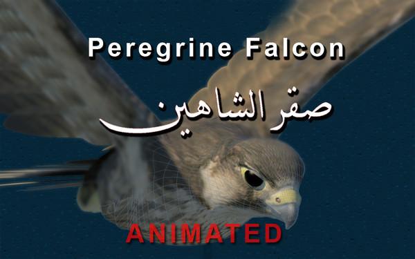 Peregrine Falcon Folded Wings
