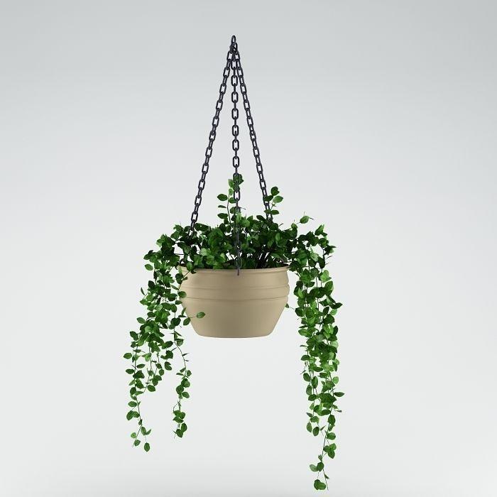 Plant 29