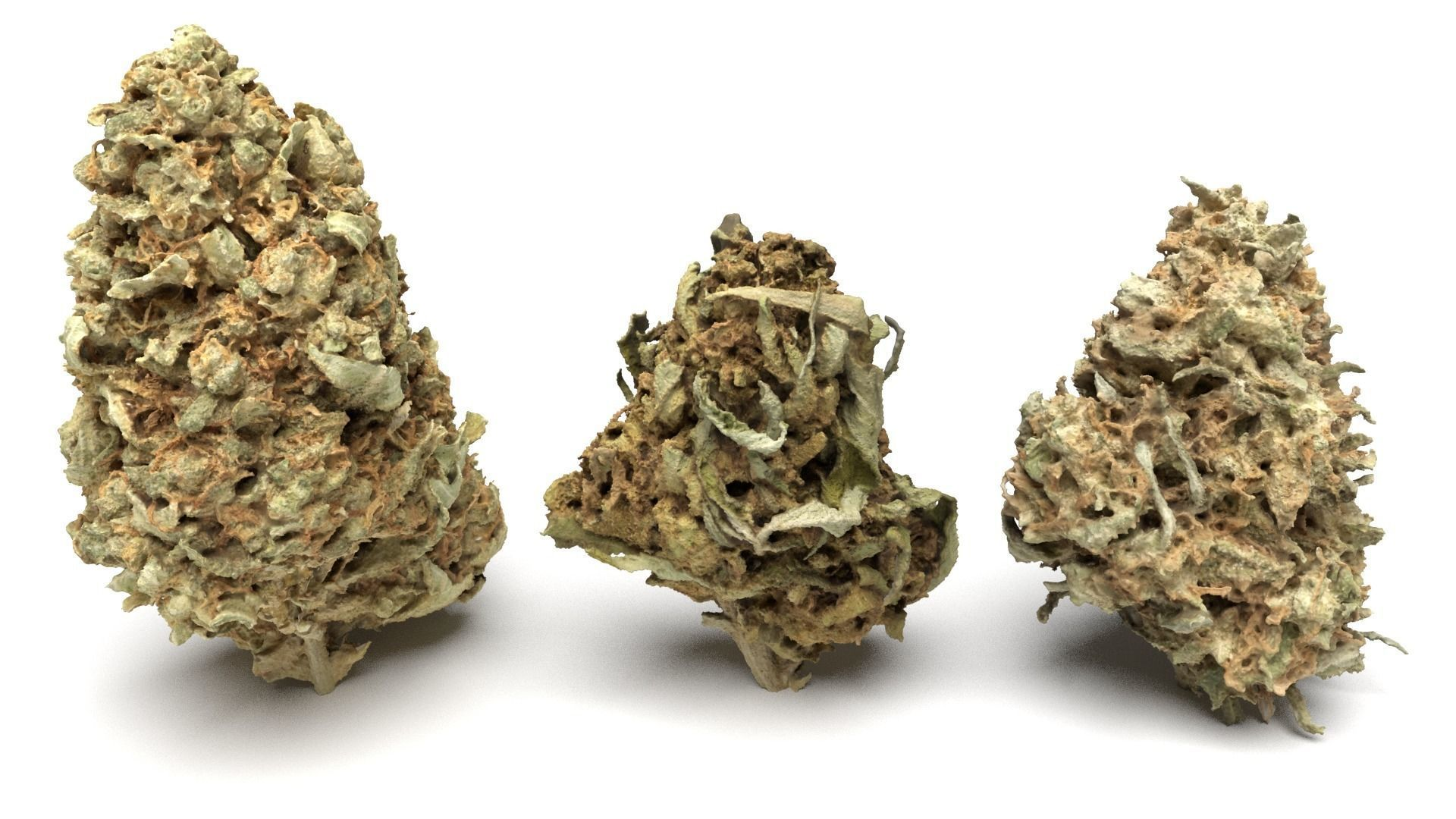 Cannabis Buds 3-Pack