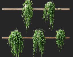 Potted plants on shelves 3D model