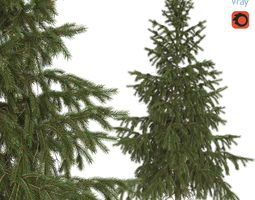 3D model High Poly Spruce Tree