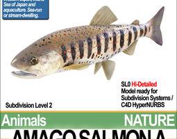 Amago Salmon A 3D Model